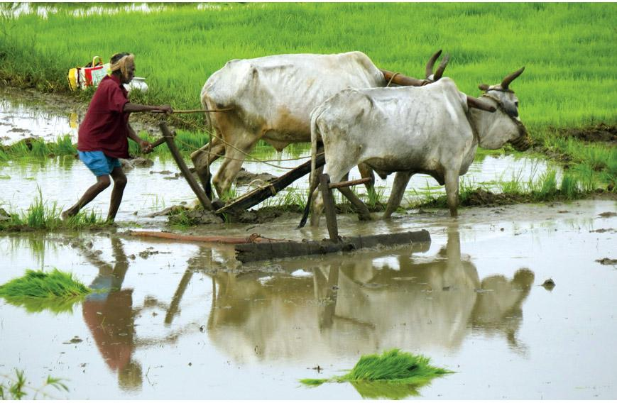 malayalam essays on agriculture Module - 2 india: natural environ-ment, resources and development 253 agriculture in india social science notes 4 mixed farming: it is a situation in which both raising crops and rearing animals.