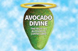 Avocado is a blessing for coffee growers