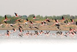 Little Rann of Kutch is teeming with wildlife