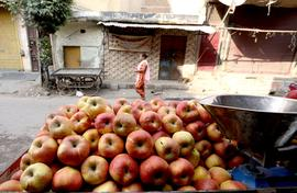 Don't import apples, say hill farmers