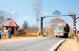 Why Bandipur is  special: jungles and rustic living
