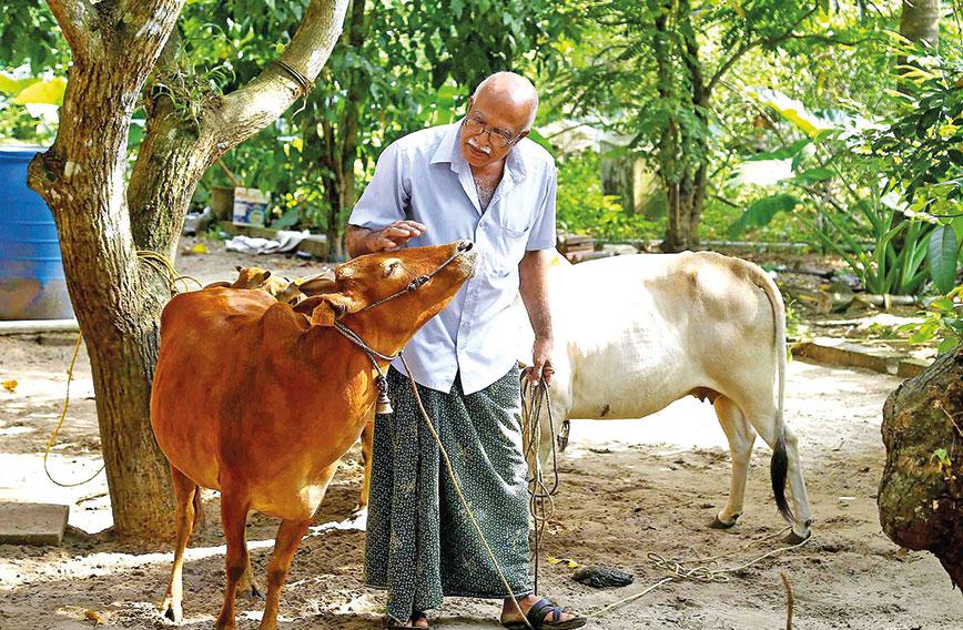 Kerala farmers give Desi cows get a brand name - Civil Society Magazine