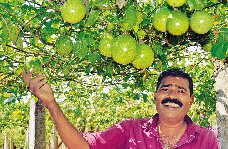 Kerala Is Crazy About Pion Fruit