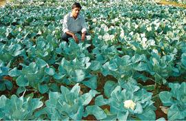 Kerala farmers learn to grow winter vegetables