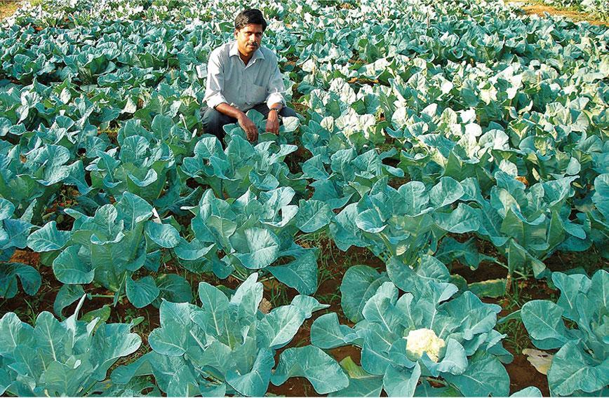 Kerala farmers learn to grow winter vegetables - Civil ...