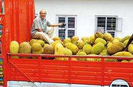 How farmer-journos made jackfruit a star in Kerala