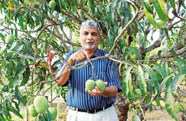 Anthony Pacheco's idyllic organic farm in Goa