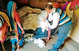 Organic boosts tribal incomes from cotton